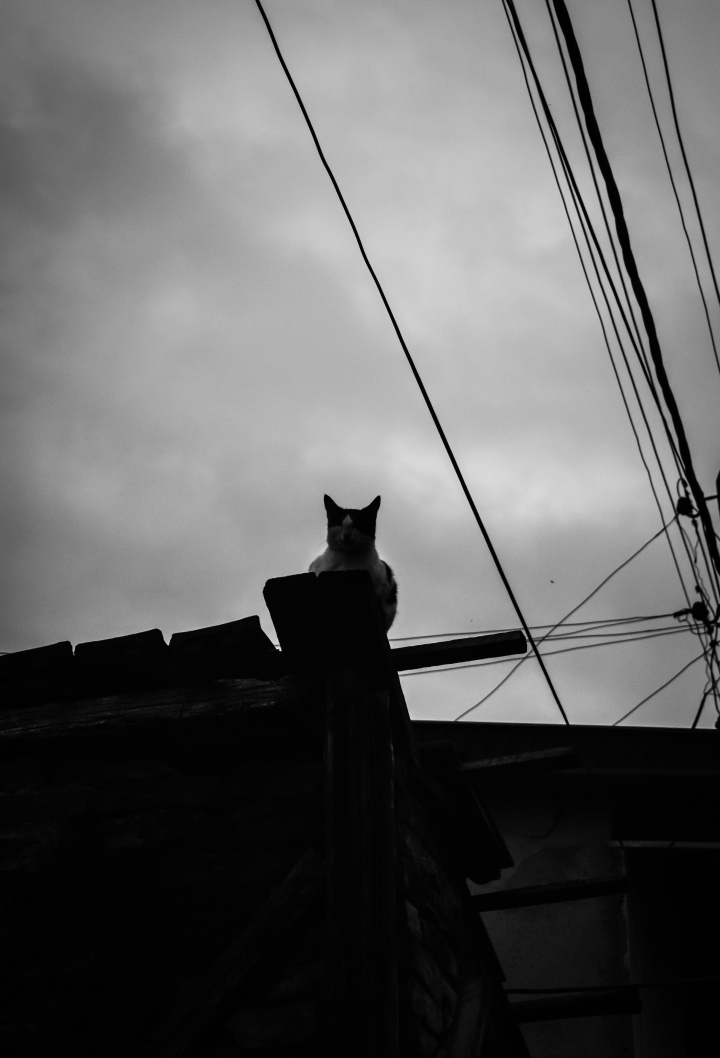 cat-on-a-cold-wooden-roof